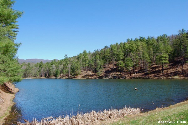 Braley's Pond
